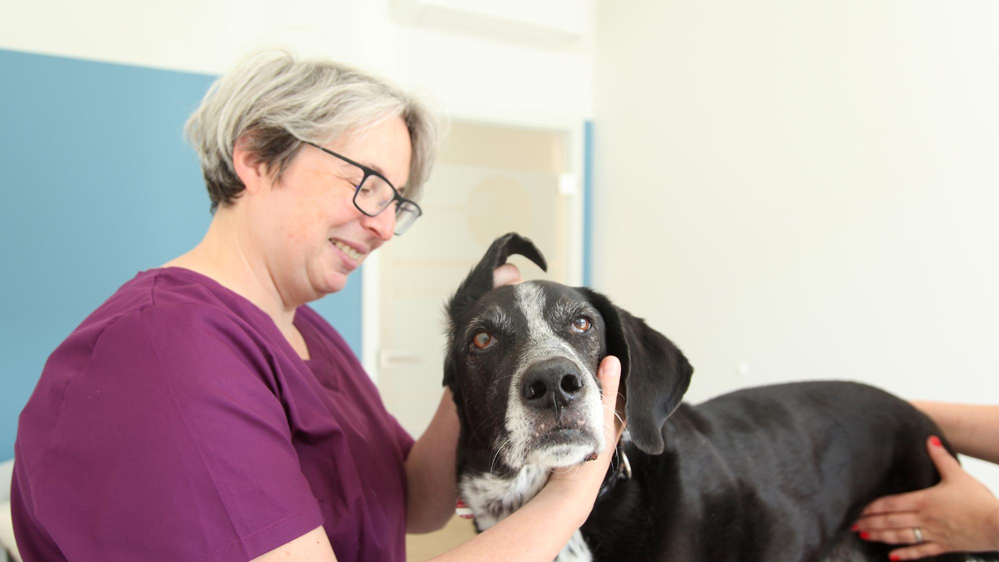 tierarztpraxis areal boehler behandlung
