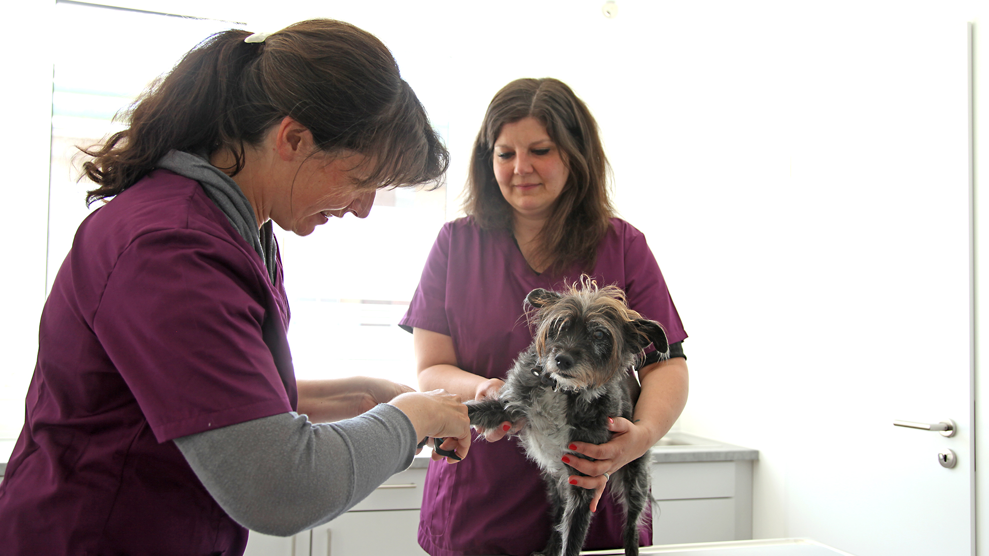 tierarztpraxis areal boehler behandlung hund