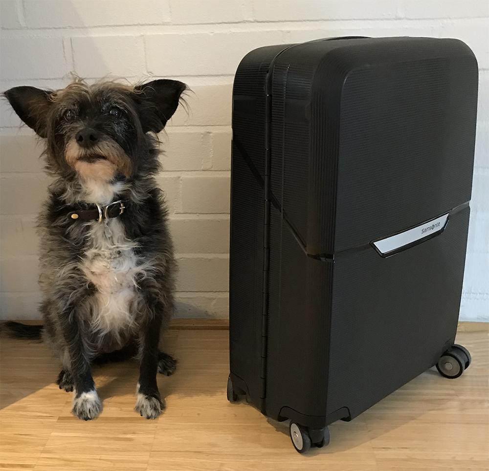 hund reisekrankheit katze